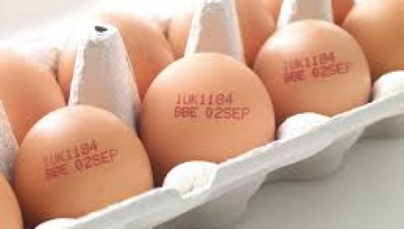 eggs print EGGS PRINT eggs print 5 4 eggs print EGGS PRINT eggs print 5 4